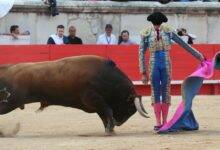 Photo of SAMEDI TOROS La Crau a les crocs