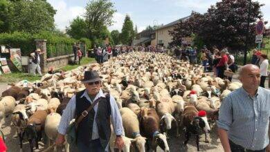 Photo of L'ESPÉROU Retour en images sur la traditionnelle fête de la Transhumance