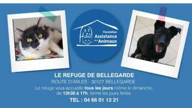 Photo of BELLEGARDE Ouchka et Cidy vous attendent au Refuge !