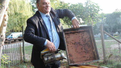 Photo of MUNICIPALES Alès : les abeilles font le buzzzzz !