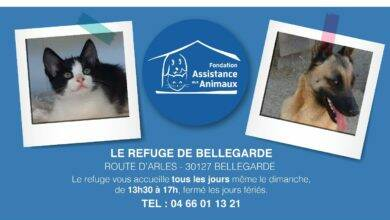 Photo of BELLEGARDE Filou et Gustave n'attendent que vous au Refuge !