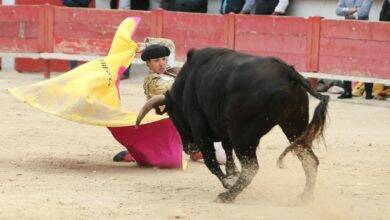 Photo of TOROS Une novillada sans picador à Bouillargues